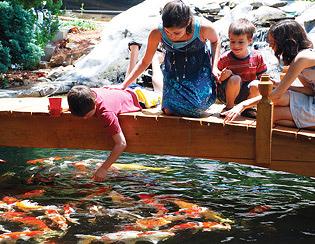 Koi Feeding Pond